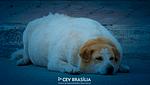 CEV-BRASILIA-CLINICA-VETERINARIA-BRASILIA-CLINICA-001-blog-obesidade-em-caes-e-gatos