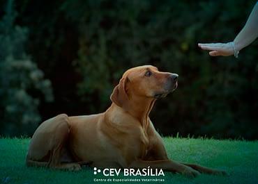 Como treinar o seu pet? Saiba o que os comportamentalistas ensinam sobre adestramento!