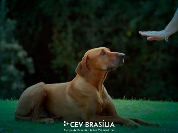 CEV-BRASILIA-CLINICA-VETERINARIA-BRASILIA-CLINICA-001-blog-reforço-positivo-e-negativo