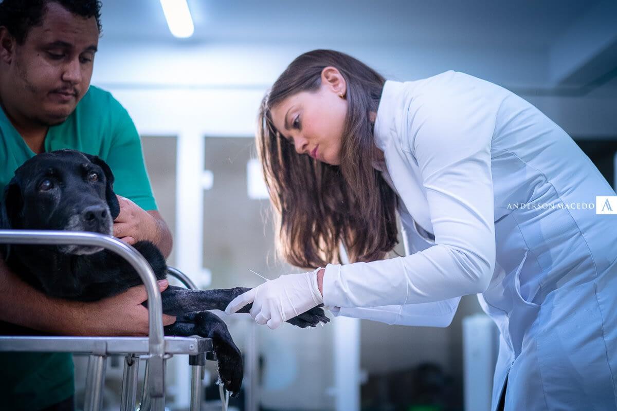 Como-deve-sera-vacinacao-de-cachorros-no-primeiro-ano-de-vida-cev-clinica-veterinaria-brasilia