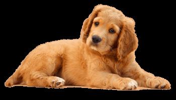 dog_PNG50388