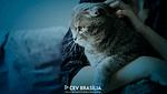 CEV-BRASILIA-CLINICA-VETERINARIA-BRASILIA-CLINICA-001-blog-obesidade-em-gatos