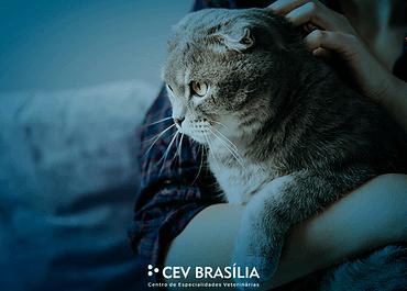 Obesidade em gatos: como fazer com que ele não sofra desse mal?