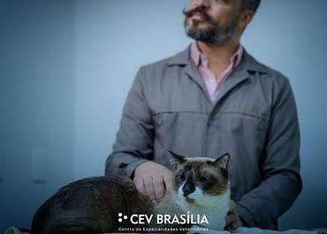 Castração de gatos! Castrar ou não castrar A resposta está aqui
