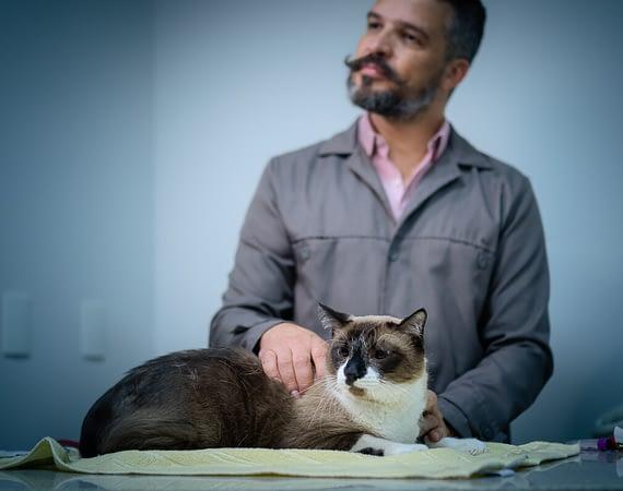 Quando é a hora certa de fazer a castração do gatinho?