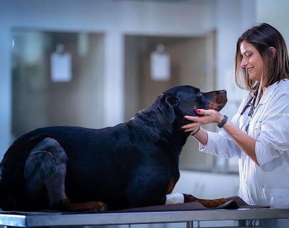 Como acertar na escolha da melhor clínica veterinária